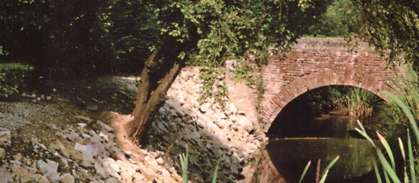 Fiori de fosso slide 1470×642